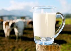 чаванпраш с молоком
