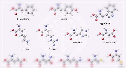 аминокислотный состав растительных белков